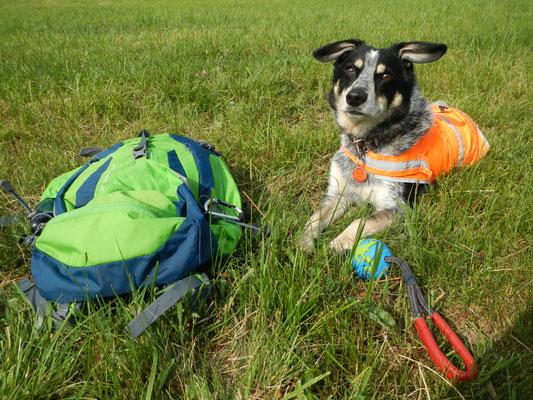 Während Frauchen die Daten aufnimmt und Protokolle schreiben muss, bewacht Hundchen alle wichtigen Feldutensilien.