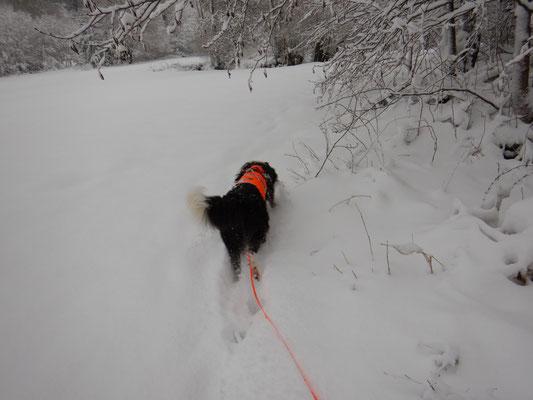 Und weiter geht es, mit Freude durch den schönen Schnee.