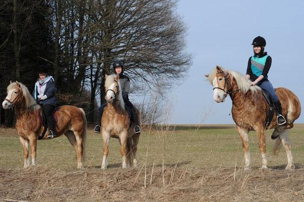 Reiter im Kleinolbersdorfer Umland