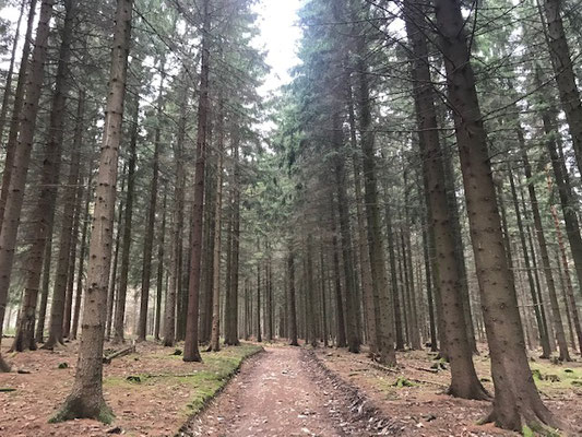 Waldweg in Richtung Adelsbergturm