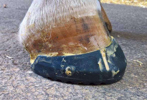 glue shoe, klebe hufeisen, klebe beschlag studer Hufboy