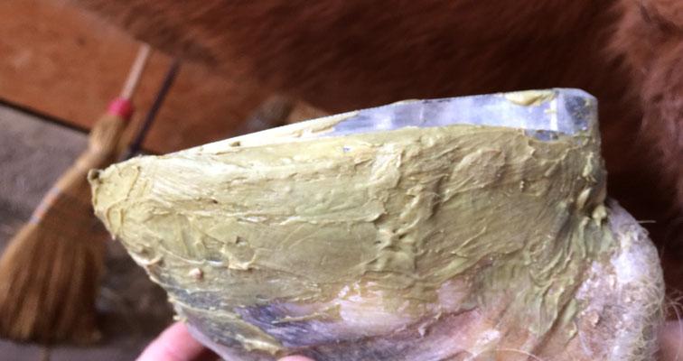 Hufrehebeschlag geklebter beschlag hufschmied, Barhufpflege Reto Studer
