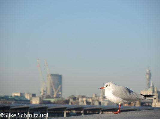 fotografiert mit Nikon P7700 (2014)