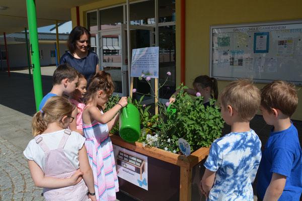 Die Kinder sind das Schuljahr über für die Pflege der Beete verantwortlich. Das schließt auch das Gießen der Pflanzen mit ein, vor allem an heißen Tagen. Foto: Ludwig Berger
