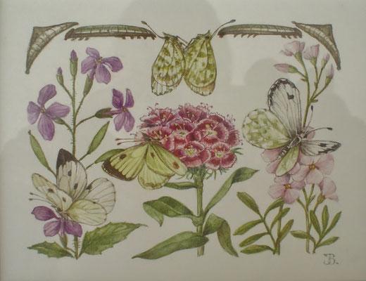 Origineel uit het boekje Vlinders lokken in de tuin. Aquarel (nr. 2) door Han v.d. Broeke. 9 x 12cm. Prijs € 345,- Uitgever Thieme in opdracht van het blad Margriet.