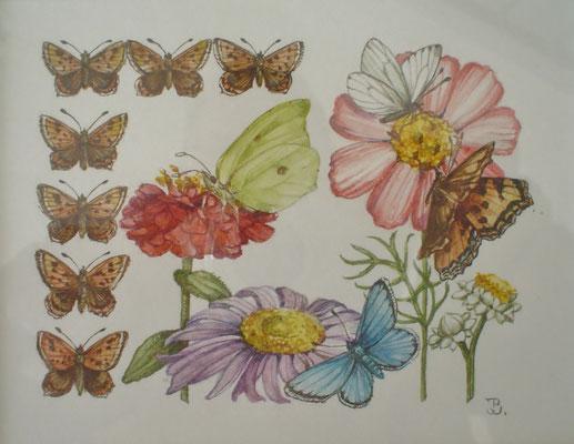Origineel uit het boekje Vlinders lokken in de tuin. Aquarel (nr. 1) door Han v.d. Broeke. 9 x 12cm. Prijs € 345,- Uitgever Thieme in opdracht van het blad Margriet.