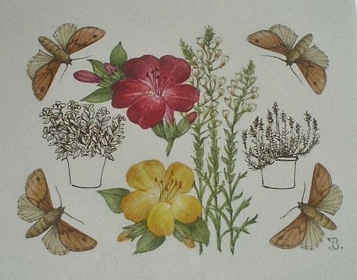 Aquarel Han van den Broeke. Kunstenaar te Veere.