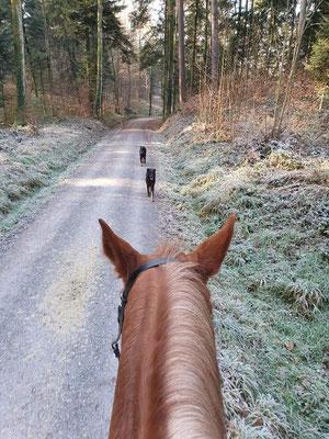 Barraz, Chia und Pferdchen Sunny