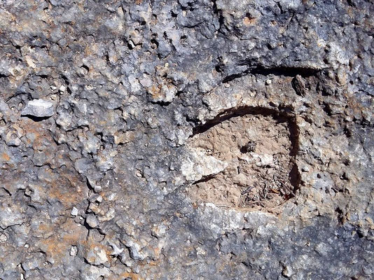 Empreinte deux doigts (30 millions d'années)