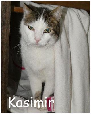 Kasimir, ca. 10-14 Jahre