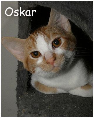 Oskar, 6 Monate