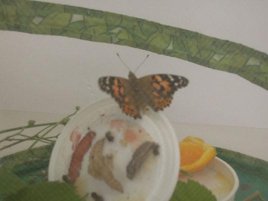 Tata, der Schmetterling ist da.
