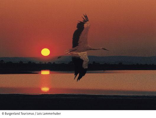 sunset at Lake Neusiedl