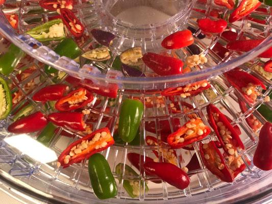 Super-Scharfe Chilis - in Bad Vilbel gereift - Nicole