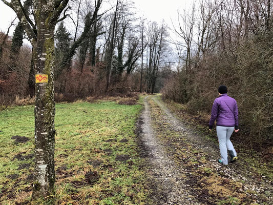 Weg von Ecking nach Neukirchen
