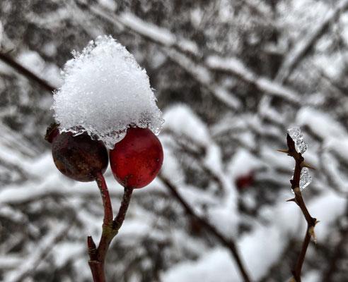 Winter-Stilleben
