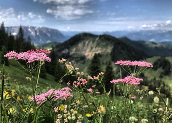 Sommerliche Bergwiese