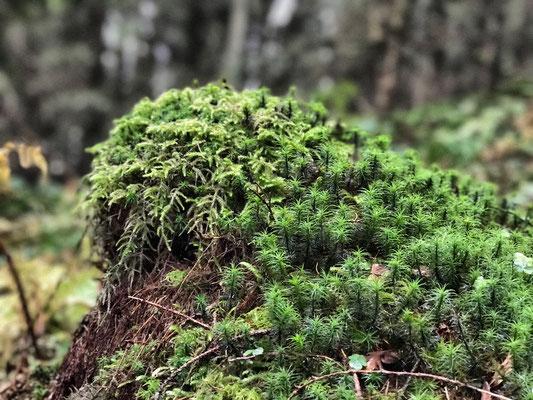 Im herbstlichen Bergwald