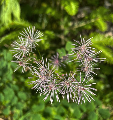 Sommerblumen auf dem Weg nach Kirchwald