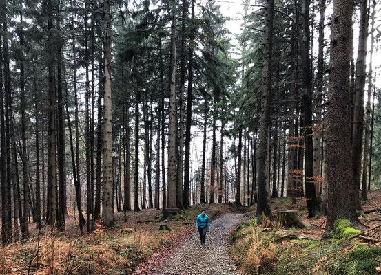 Zwischen Sagberg und Rauchalm
