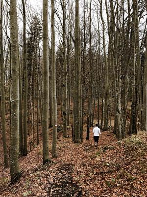 Durch den Bergwald am Kranzhorn