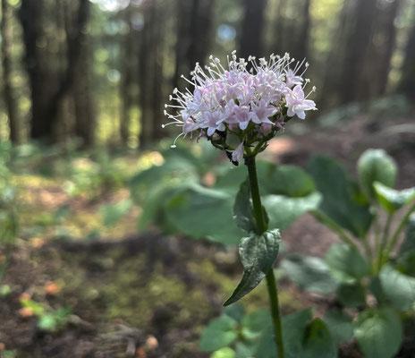 Blumen beim Abstieg