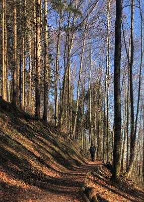 Im Wald am Aggbichl