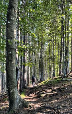 Aufstieg im Bergwald am Kranzhorn