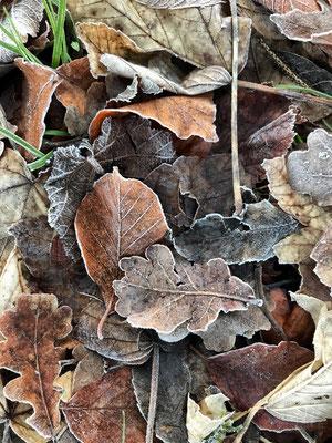 Gefrorene Herbstblätte