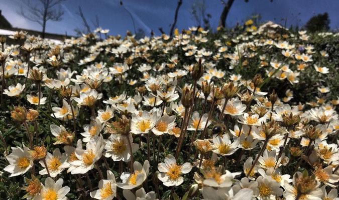 Blumenpracht am Fuße des Sulten