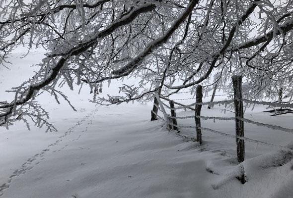 Unter den Zweigen