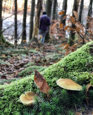 Durch den Wald am Langbürgner See