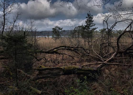 Moorlandschaft am Ufer des Hartsee