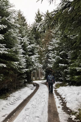 Im Söllhubener Wald