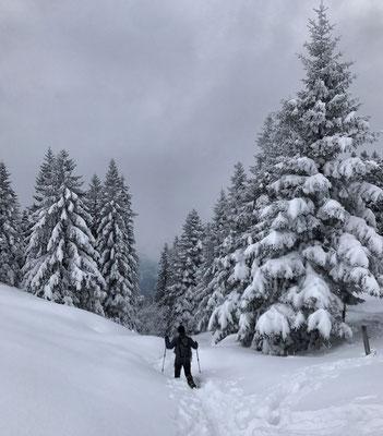 Abstieg zurück Richtung Hohenaschau