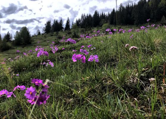 Blütenpracht an der Winterstubn