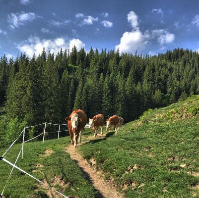 Tierische Begleitung auf dem Weg zur Priener Hütte
