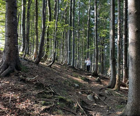 Aufstieg durch den Buchenwald