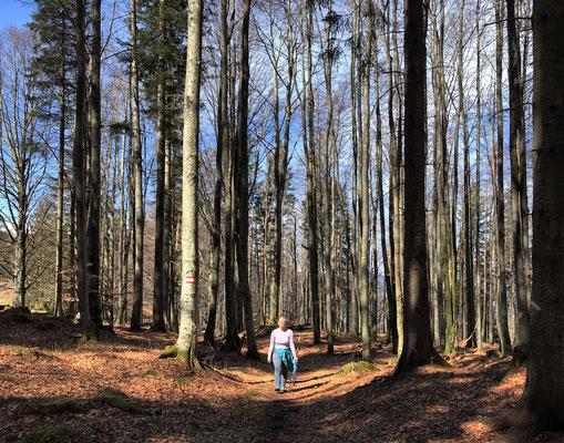 Durch den Bergwald in Richtung Kranzhorn