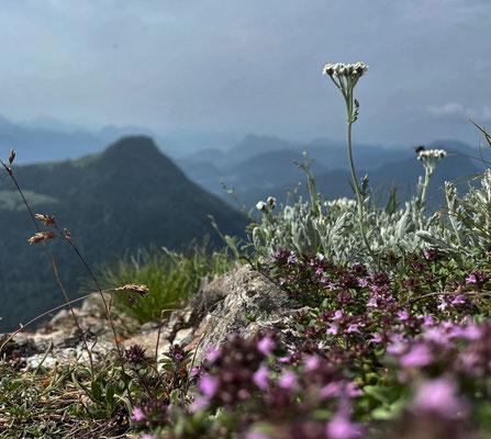 Blumen am Kitzstein-Gipfel