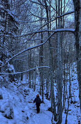 Bergauf durch den Wald vom Moserboden zur Ebersberger Alm