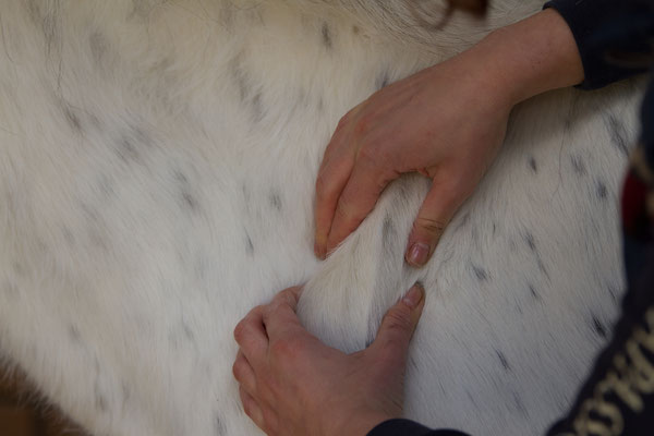 Nadine Wenzel Tierphysiotherapie, www.nw-tierphysiotherapie.de, Massage