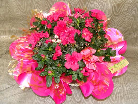 PF2-L'Azalée rose vif