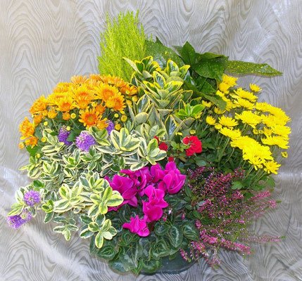 Composition de plantes 69 €