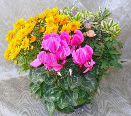 Composition de plantes 32 €