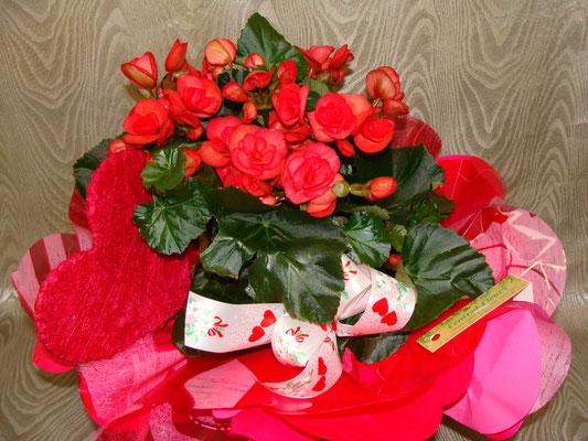Begonia collerette avec decoration