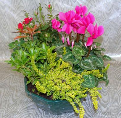 composition d 39 exterieur central fleurs fleuristes st malo. Black Bedroom Furniture Sets. Home Design Ideas