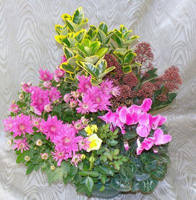 Composition de plantes 38 €