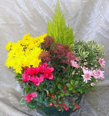 Composition de plantes 48 €