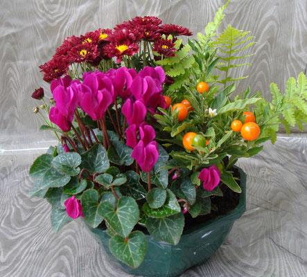 Composition de plantes 27 €